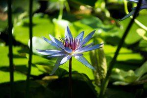 Blume Massage