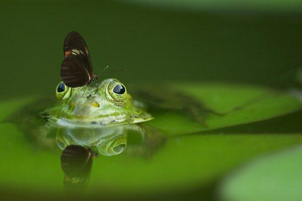 Krafttierreise - Frosch und Schmetterling
