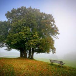 Herbst – Zeit, das Immunsystem zu stärken