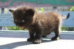 Kätzchen mit Angst